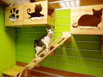 Развлекательный центр для кошки своими руками