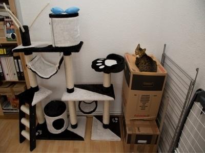 Домик с высокой башней для кота