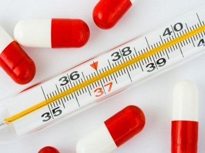 Влияние блох на здоровье человека