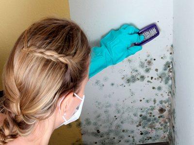 Средство от плесени и грибка на стенах: ТОП средств