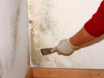 Чем смыть плесень со стены