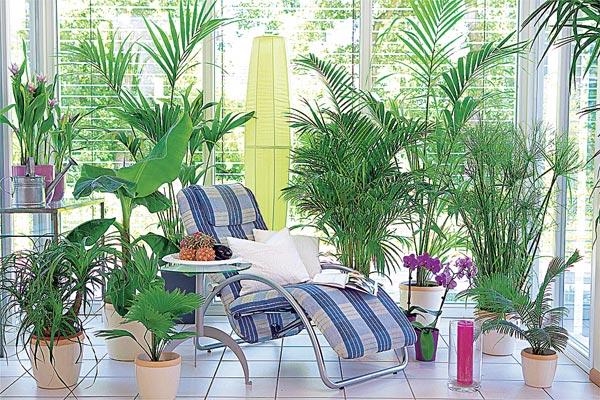 Высокие комнатные растения названия