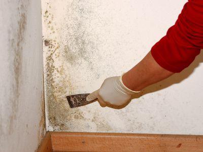 грибок на стенах