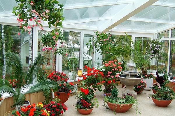 Цветущие комнатные цветы