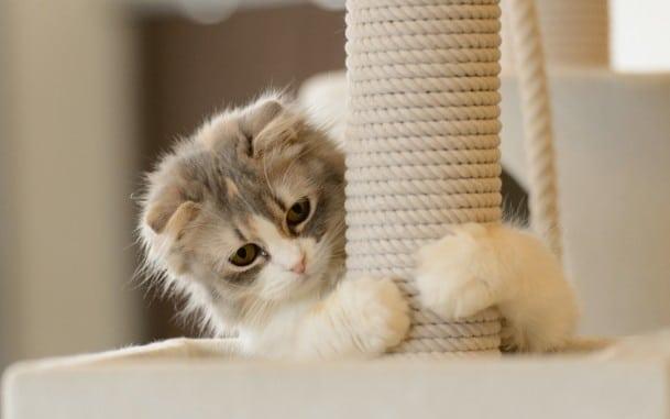 Как защитить обои от кошек